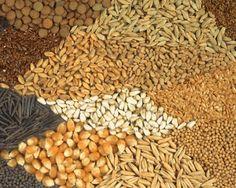 Meram Ziraat Odası Başkanı Ali Ataiyibiner, tohum üretimi ve deneme üretiminde başarı elde edilen karabuğdayın Konya ve Türkiye için yeni bir alternatif ürün olacağını söyledi.  Ataiyibiner, yaptığı yazılı açıklamada, karabuğdayın ciddi kazanç sağlayacağını ve yeni istihdam alanları oluşturacağını belirtti.