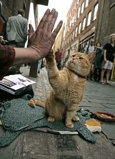 Hi five: The relationship between James and Ginger Bob could be made into a Hollywood film