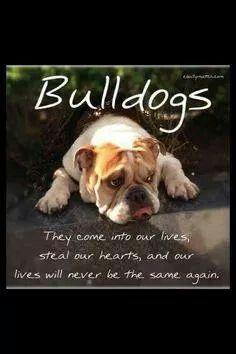 Love my bulldogs
