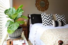 TiffanyD: Caring For House Plants: A fiddle leaf fig story. and an nameless orchid. Guest Bedrooms, Guest Room, Master Bedroom, Fiddle Leaf Fig, Pretty Green, House Plants, Orchids, Sweet Home, Furniture