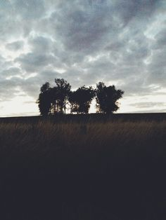 The trees of horror Horror, Trees, Celestial, Sunset, Outdoor, Outdoors, Tree Structure, Sunsets, Outdoor Games