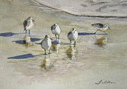 Watercolor of sandpipers at the seashore, with reflections from the sunlight on the wet beach.
