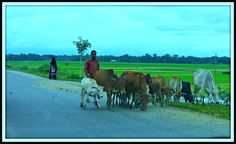 Some of the tradition and customs are as ancient as prehistoric days, while others are relatively recent. The indigenous customs and festivals that has been preserved and nurtured through the ages are principally center around agricultural practices. These include nabonno (the festival of the new harvest) and pawhela boishAkh (the Bengali new Year). Religion has also played a distinct role in shaping the mores and traditions of Bangladeshi life.