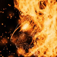 picture of flaming lion - Google Search