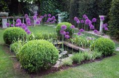 Purple haze  -  Alliums are fantastic bulbs; they almost float above the rest of the border.