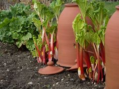 Plant a Perennial Food Garden - Gardening - Mother Earth Livinghat emerge should not be harvested during the first growing season—and only lightly during the second Veg Garden, Vegetable Garden Design, Garden Plants, Indoor Plants, Permaculture, Garden Cloche, Garden Planning, Horticulture, Garden Projects