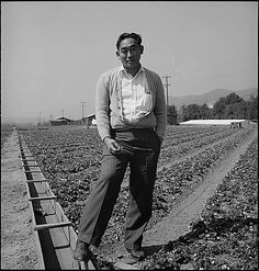 """Warm Springs, California. Harry Konda is shown above in strawberry field on March 27, 1942, six weeks before he and 142 other farmers were evacuated from this district in Santa Clara County. He is an officer of the Japanese American Citizens League. Evacuees of Japanese descent will be housed in War Relocation Authority centers for the duration."" (Photographer: Dorothea Lange. Source: US National Archives)"