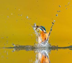 Common Kingfisher, Painting, Animals, Art, Steel, Art Background, Animales, Animaux, Painting Art