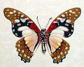 Colorful African Real Conservation Butterfly Display 442. $59.99, via Etsy.