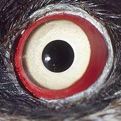 Aug in Auge mit der Natur - Ein Puzzle Spiel über Augen ... Iris, Reptile Eye, Animal Close Up, Vision Eye, Macro Shots, Dragon Eye, Organic Shapes, Photo Reference, All About Eyes