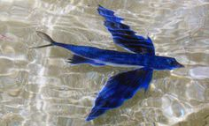O Livro da Natureza: Peixes Beloniformes