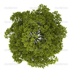 tree top view - Google Search