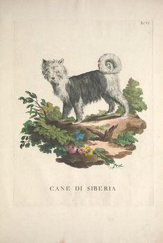 v. 2 [1771] - Descrizioni degli animali : - Biodiversity Heritage Library