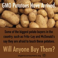 New GMO potatoes may look pretty. But when some of the biggest buyers, like McDonald's, are reluctant to purchase them you have to wonder: Will anyone buy them? Learn more: http://orgcns.org/1CuB2tY #GMO