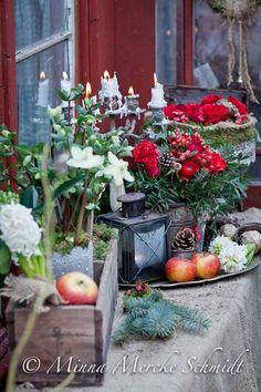 jul rött blommor julblommor-2