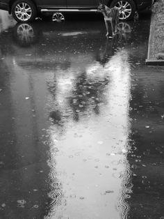 #Leica #Summarit #Huawei