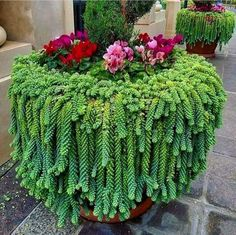 The cute succulents are the best choice to decorate your home.We have collected 45 cute successful plants ideas for you to decorate your home.Hopefully, these succulents will put you in a good mood every day. Succulent Landscaping, Succulent Gardening, Cacti And Succulents, Planting Succulents, Container Gardening, Garden Landscaping, Planting Flowers, Organic Gardening, Succulent Outdoor