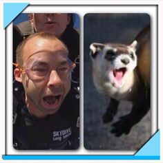 Murr and Ferret, my favorite picture of Murr