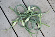 garlic scape pesto -