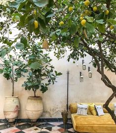 El Fenn Hotel Marrakech on If youve never picked a lemon warm from a tree amp; smelled it then we suggest you hop to it and jump on a plane right now. Tis the season. Dream Garden, Home And Garden, Garden Villa, Garden Homes, Garden Living, Outdoor Spaces, Outdoor Living, Casa Hotel, Plantation Style Homes