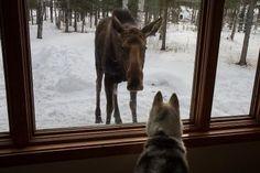 From The Alaska Life on FB