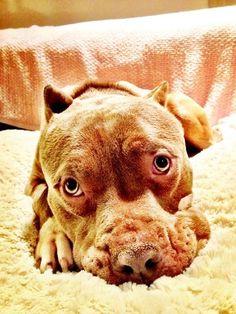 Best Eyes Finalist - Hannah's dog Batman from Taylorsville, Utah.