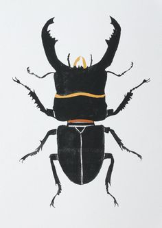 SALE Insect illustration-Stag Beetle Original by CreatedByStorm