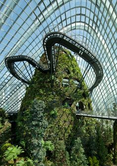 World Architecture Festival 2012: the Cooled Conservatories designed by Wilkinson Eyre Architects at the Gardens by the Bay tropical garden in Singapore have been awarded the World Building of the Year prize at the World Architecture Festival in Singapore.