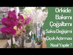 Orkidenin Çiçek Açması İçin Ne Yapmalı? - Canım Anne Glass Vase, Blog, Blogging