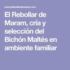 El Rebollar de Maram, cría y selección del Bichón Maltés en ambiente familiar
