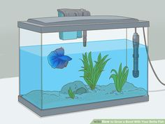 How to Grow a Bond With Your Betta Fish: 11 Steps (with Pictures) Baby Betta Fish, Betta Fish Types, Betta Fish Care, Pet Fish, Mini Aquarium, Betta Aquarium, Betta Tank, Fish Tank, Colorful Fish