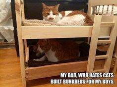 People Who Said They Didn't Want a Damn Cat – 12  Pics