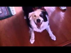 Video compilation of Dogs sneezing uncontrollably | Awesomelycute - Cute Kittens, Cute Puppies, Cute Animals, Cute Babies and Cute Things in General