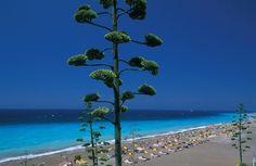 Visit Greece   Rhodes