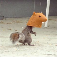 Big Head Squirrel Feeder- We've reinvented the squirrel feeder for the 21st century! Why not humiliate the squirrels while they eat? Makes it look like they have giant, hilarious head!!