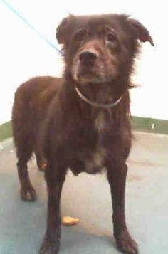 GONE --- EVE (A1671753) I am a female black Chow Chow mix.  The shelter staff think I am about 5 years old.  I was found as a stray and I may be available for adoption on 01/14/2015. — hier: Miami Dade County Animal Services. https://www.facebook.com/urgentdogsofmiami/photos/pb.191859757515102.-2207520000.1420926091./907617239272680/?type=3&theater