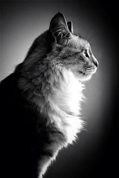 Photo prise par Chloe Badaya Delaroche Les chats auraient été domestiqués pour la première fois au néolithique (entre -6 000 et -8 000 av. J-C.).Trouvez la meilleure assurance pour votre animal de compagnie grâce à ce comparateur en ligne Découvrez d'autres images de Chloé Badaya Delaroche