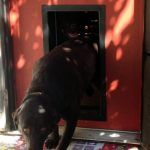 Doggy Door Pictures, Kitty Pictures - Solo Pet Doors