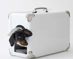 Suitcase for the dog... Looks like Kratos!!