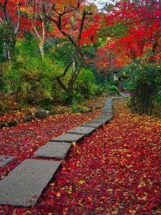 Outono em Jikisian Temple, Sagano, Kyoto, Japão por MyohoDane