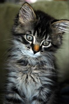 tinnacriss:  (via Pin by Nancy Bastnagel on *~PUUURFECT CATS~* | Pinterest)