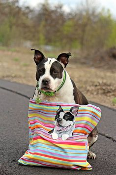 Hand painted bag with American staffordshire terrier in  a pocket. Dog AST