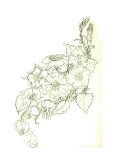 tattoo designs wild rose -