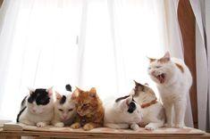 いちぬけた - かご猫 Blog