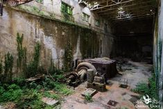 Vegetation Creeps Up Walls And Across The Floor Inside This Abandoned Hydro Power Plant Concrete Building, Concrete Floors, 10 Days In Italy, Turbine Hall, Derelict House, Hydroelectric Power, Abandoned Factory, Italian Villa, Industrial Photography