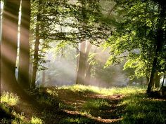 Forest Path with Sun Beams by sabrina_8639, via Flickr