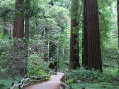 #Muirwoods #Redwoods #SanFrancisco #California July, 2013