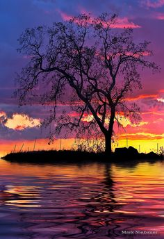 Why nature is so beautiful? Sunset at Carson, Nevada Desert sunsets are amazing Foto Nature, All Nature, Beautiful Sunset, Beautiful World, Beautiful Places, Simply Beautiful, Cool Pictures, Beautiful Pictures, Beautiful Landscapes