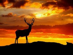 Beautiful Sunset Silhouette Animals of the world love and admire nature the same as we humans do. The awe and admiration that we feel looking at the amazing sunset or sunrise is equally felt by all other life forms as well. Wildlife Photography, Animal Photography, Beautiful Creatures, Animals Beautiful, Silhouettes, Animals And Pets, Cute Animals, Wild Animals, Nature Animals