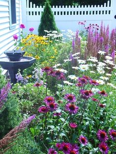 Plant coneflower, daisies and black-eyed Susans for fall, cottage-style color >> http://www.diynetwork.com/outdoors/cottage-style-landscapes-and-gardens/pictures/index.html?soc=pinterest #FlowerGarden